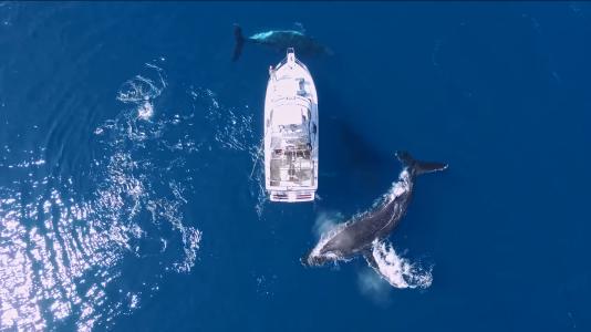 dronvideo-balna-hajo-ocean-elkepeszto-tengeri-video-hajozashu