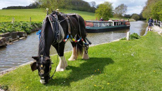 lo-vontatasu-hajo-horse-boat-canal-folyo-anglia-hajozashu